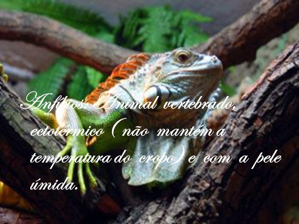 Anfíbios: Animal vertebrado, ectotérmico ( não mantém a temperatura do cropo) e com a pele úmida.