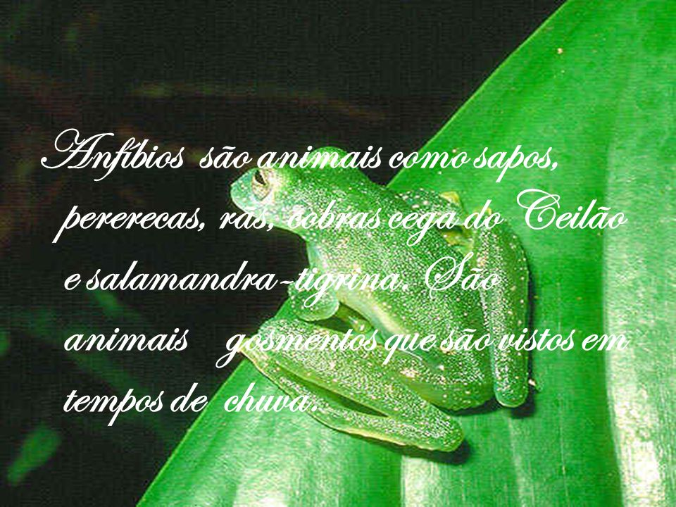 Anfíbios são animais como sapos, pererecas, rãs, cobras cega do Ceilão e salamandra-tigrina.