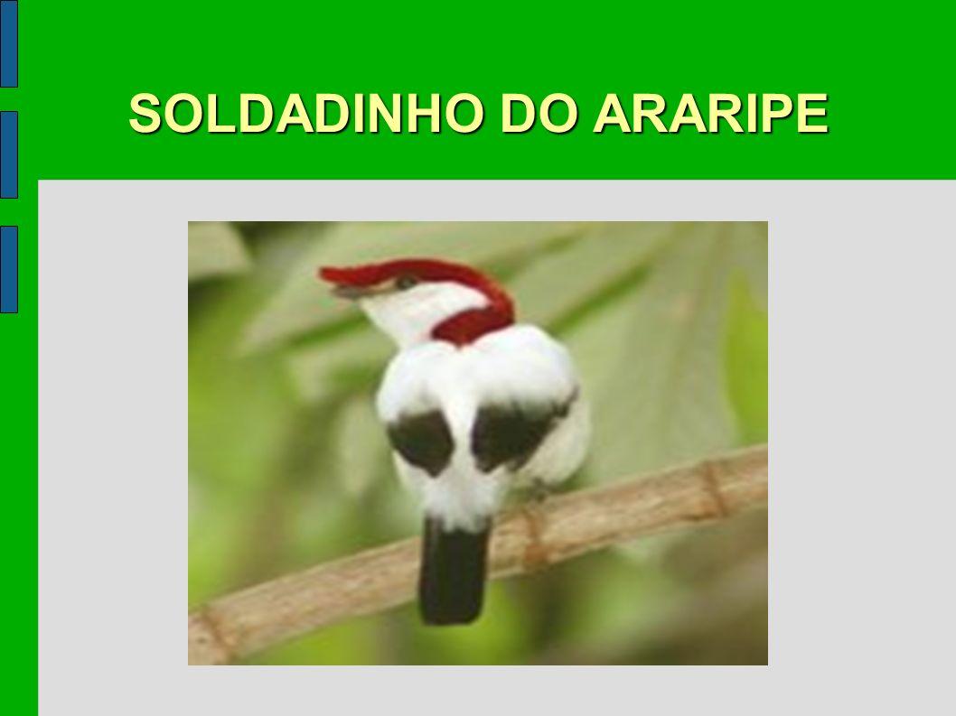 SOLDADINHO DO ARARIPE
