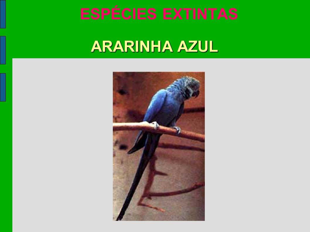 ESPÉCIES EXTINTAS ARARINHA AZUL