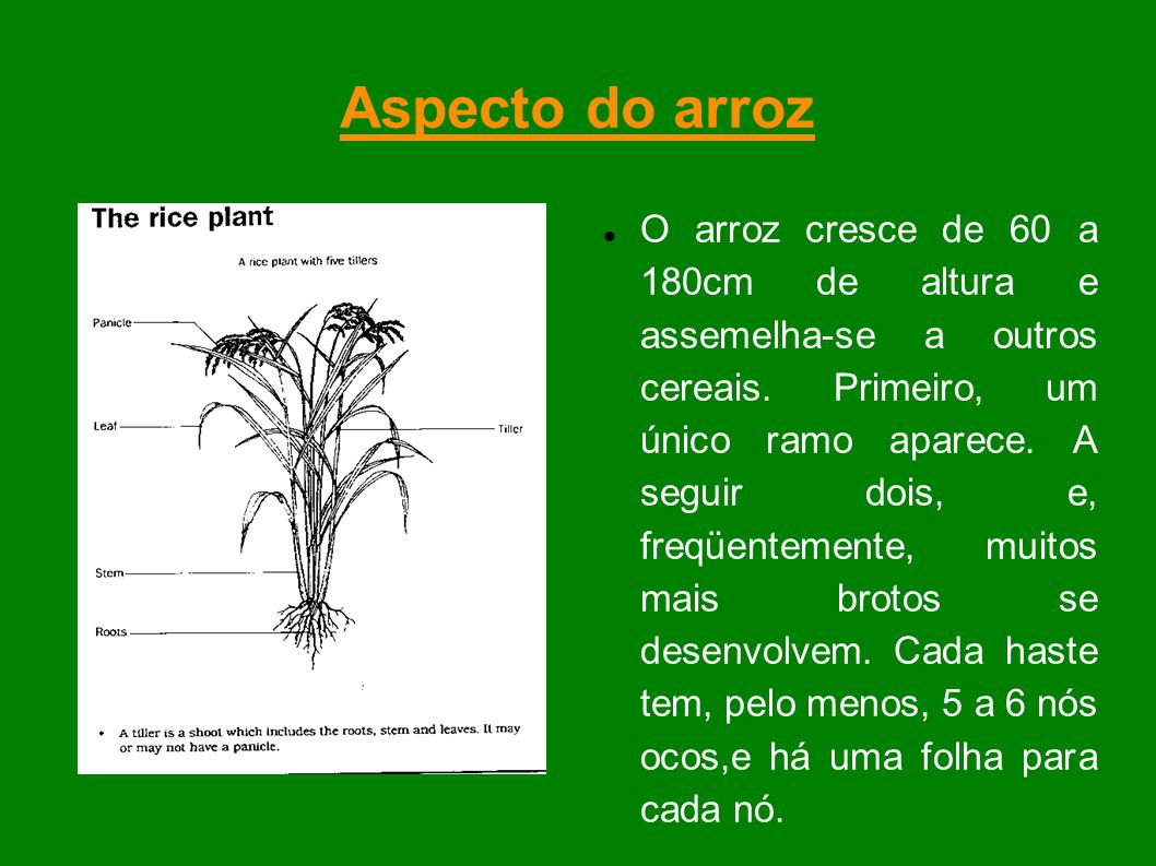 Aspecto do arroz