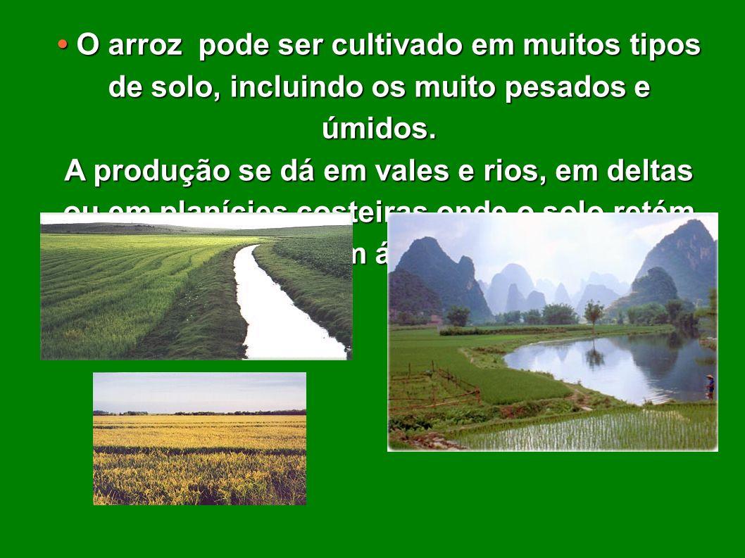 • O arroz pode ser cultivado em muitos tipos de solo, incluindo os muito pesados e úmidos.