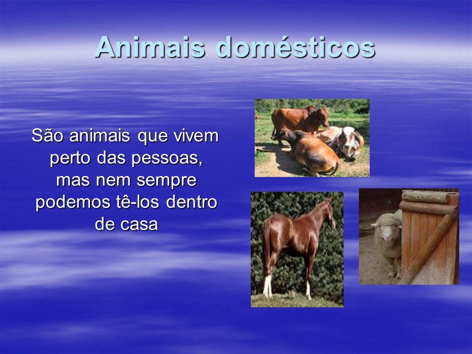 Animais domésticos São animais que vivem perto das pessoas, mas nem sempre podemos tê-los dentro de casa.