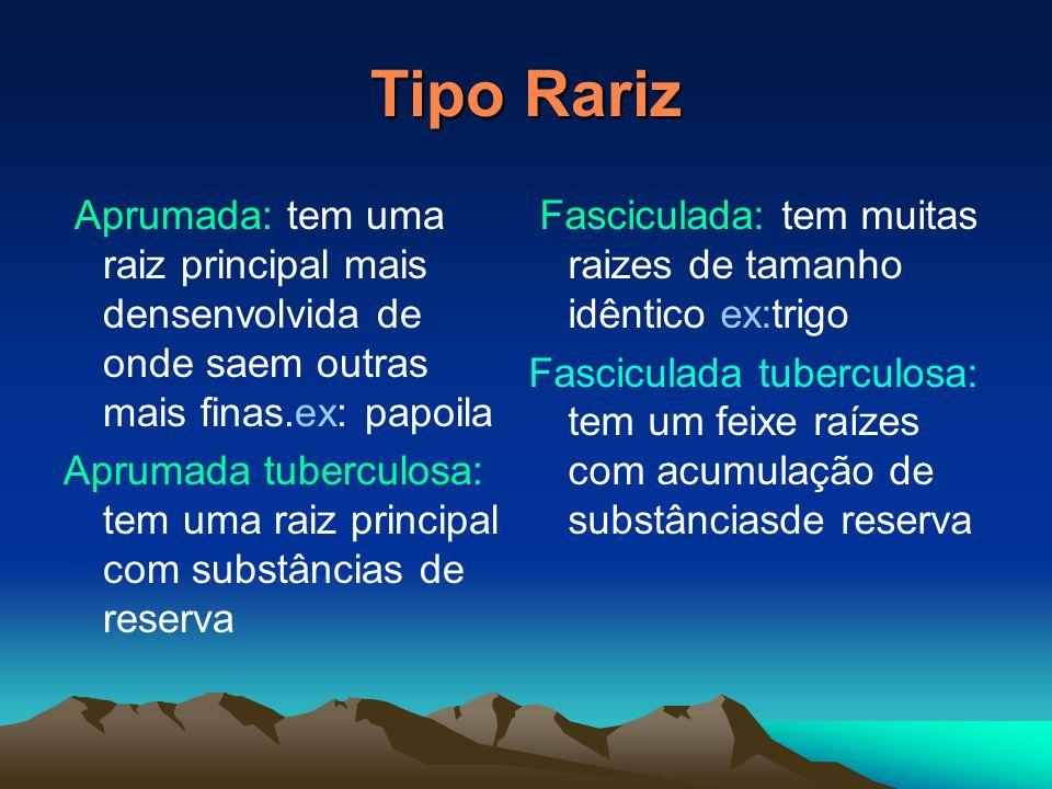 Tipo RarizAprumada: tem uma raiz principal mais densenvolvida de onde saem outras mais finas.ex: papoila.