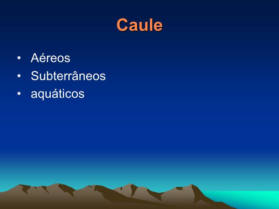 Caule Aéreos Subterrâneos aquáticos