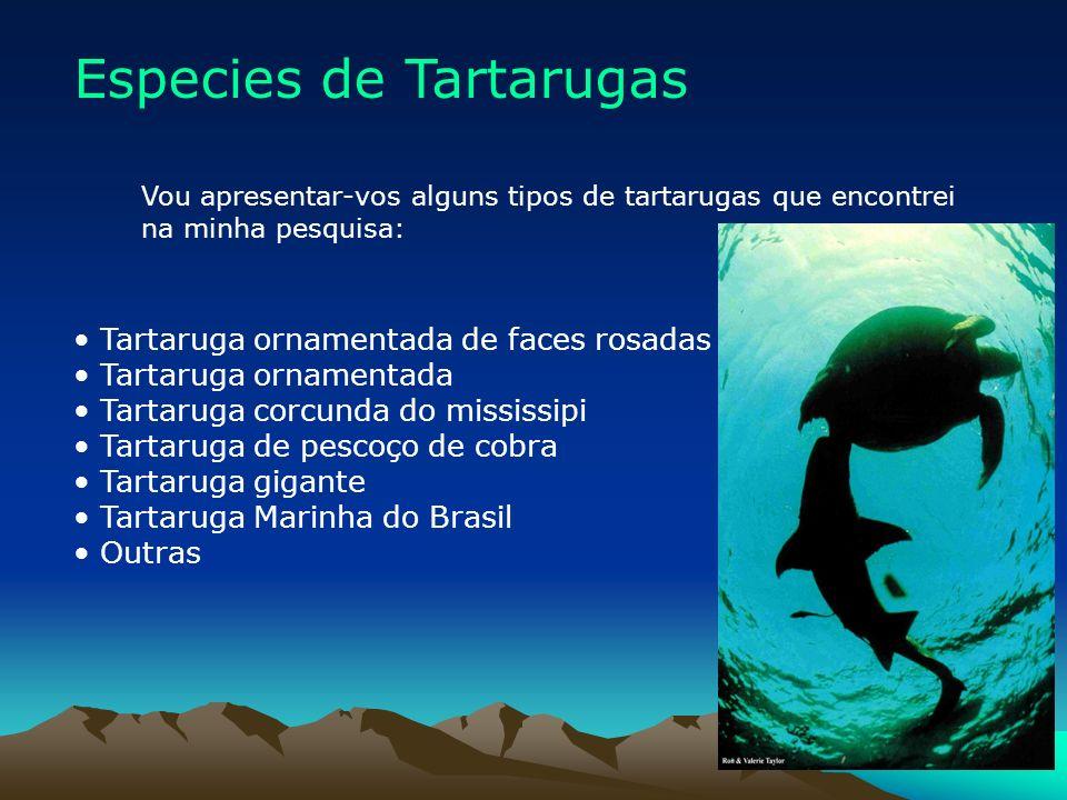 Especies de Tartarugas