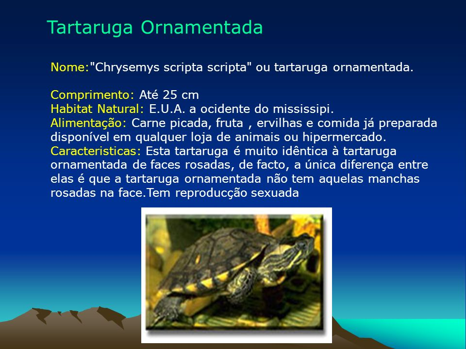 Tartaruga Ornamentada