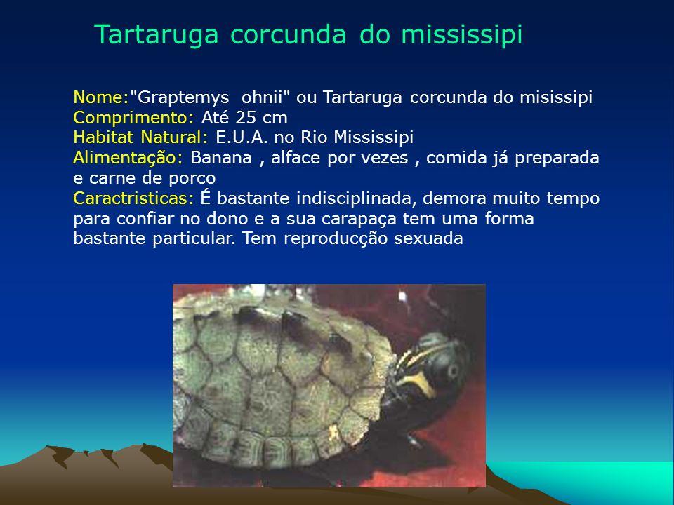 Tartaruga corcunda do mississipi