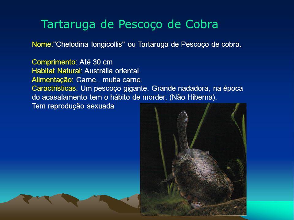 Tartaruga de Pescoço de Cobra