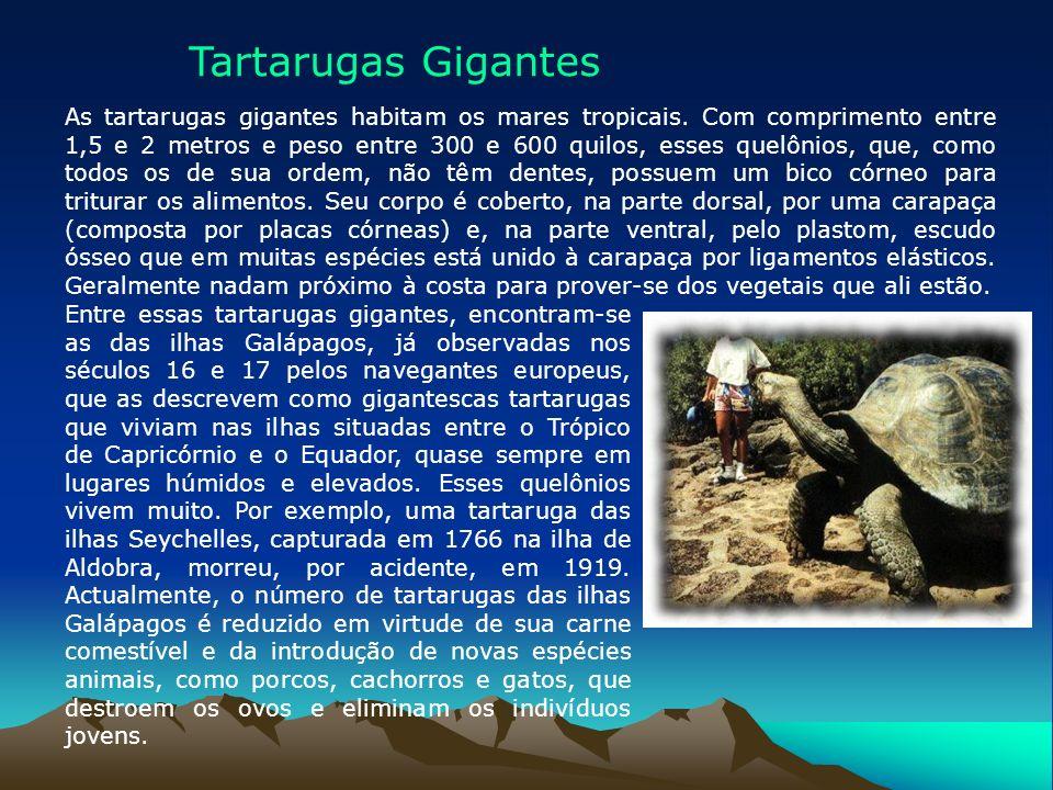 Tartarugas Gigantes