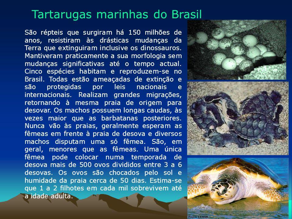 Tartarugas marinhas do Brasil