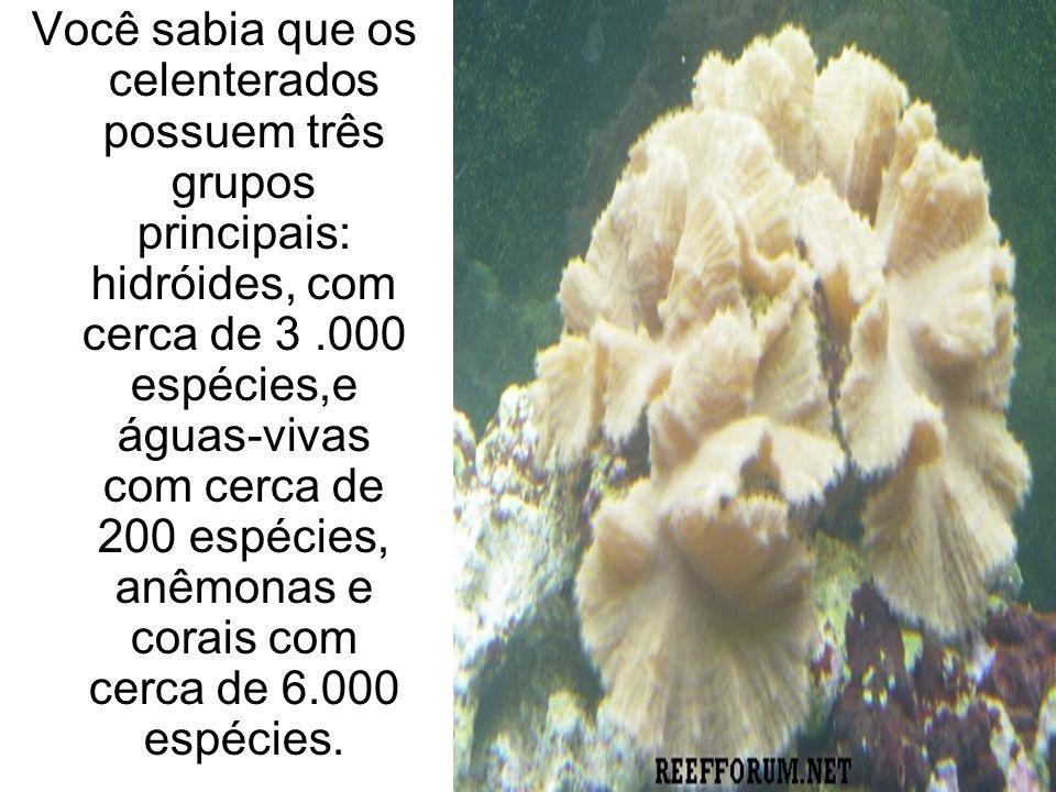 Você sabia que os celenterados possuem três grupos principais: hidróides, com cerca de 3 .000 espécies,e águas-vivas com cerca de 200 espécies, anêmonas e corais com cerca de 6.000 espécies.