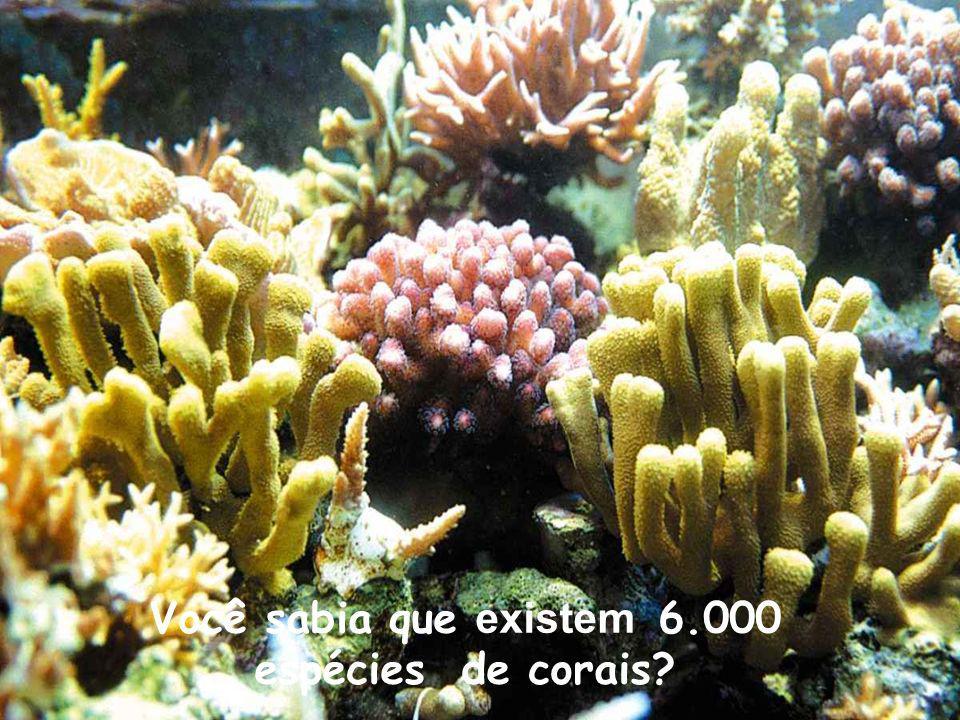 Você sabia que existem 6.000 espécies de corais