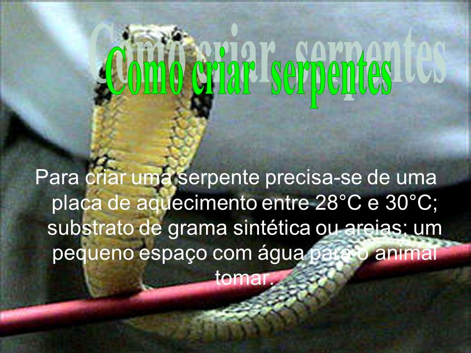 Como criar serpentes