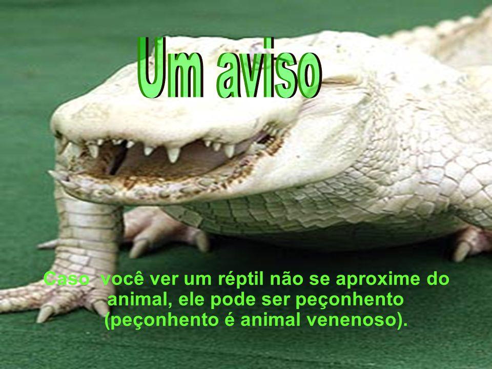 Um aviso Caso você ver um réptil não se aproxime do animal, ele pode ser peçonhento (peçonhento é animal venenoso).