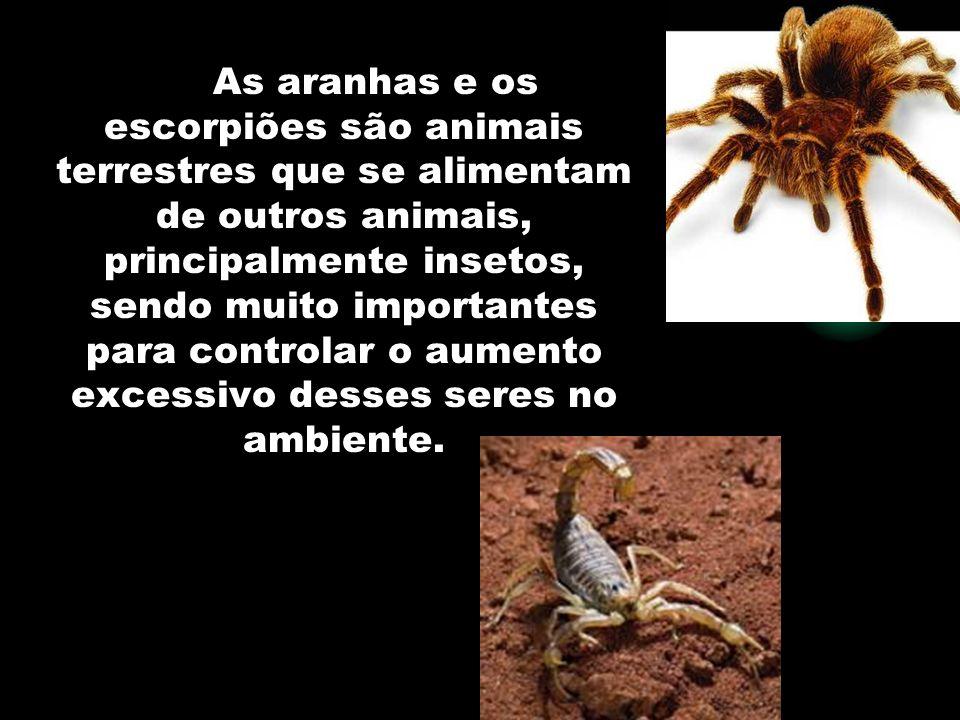 As aranhas e os escorpiões são animais terrestres que se alimentam de outros animais, principalmente insetos, sendo muito importantes para controlar o aumento excessivo desses seres no ambiente.