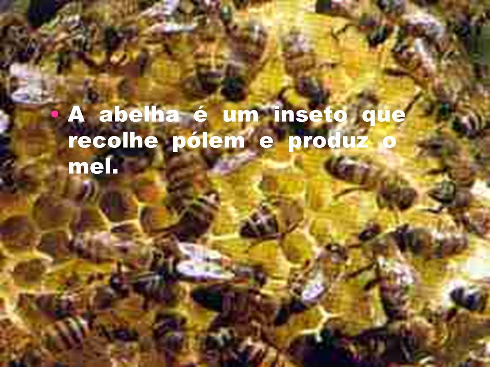A abelha é um inseto que recolhe pólem e produz o mel.