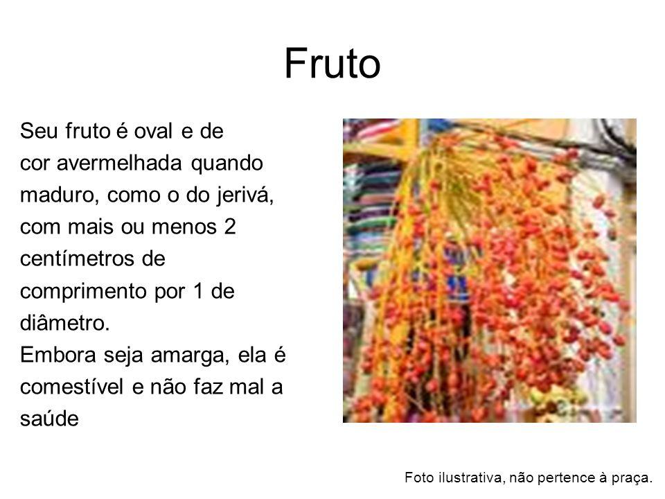 Fruto Seu fruto é oval e de cor avermelhada quando