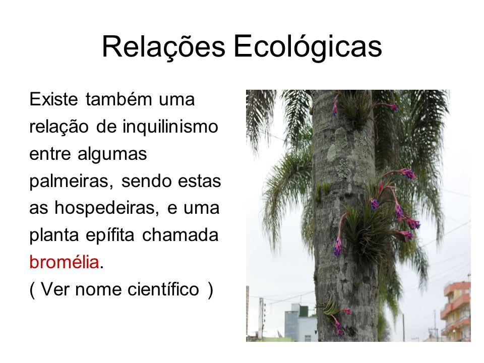 Relações Ecológicas Existe também uma relação de inquilinismo