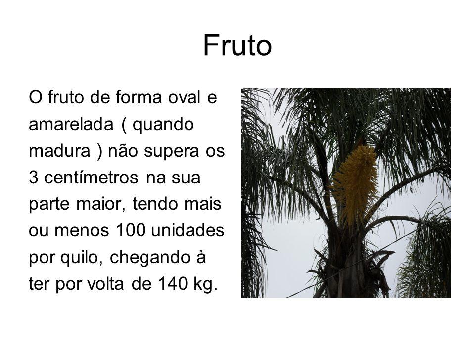 Fruto O fruto de forma oval e amarelada ( quando