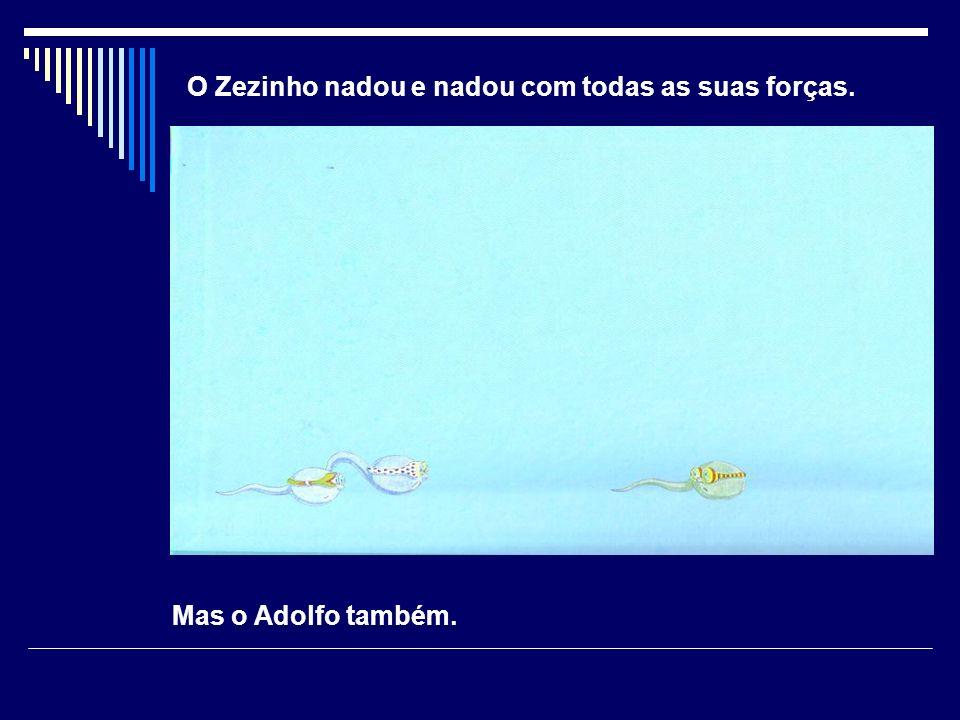O Zezinho nadou e nadou com todas as suas forças.