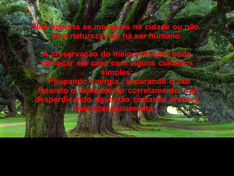Não importa se moramos na cidade ou não, sem natureza não há ser humano.