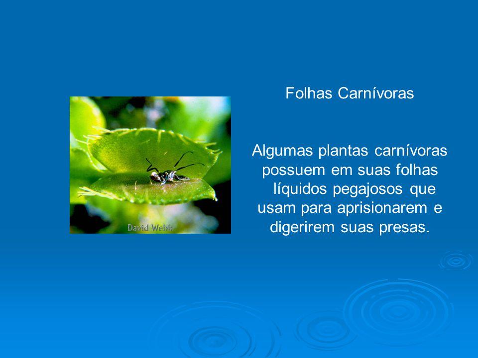 Algumas plantas carnívoras possuem em suas folhas