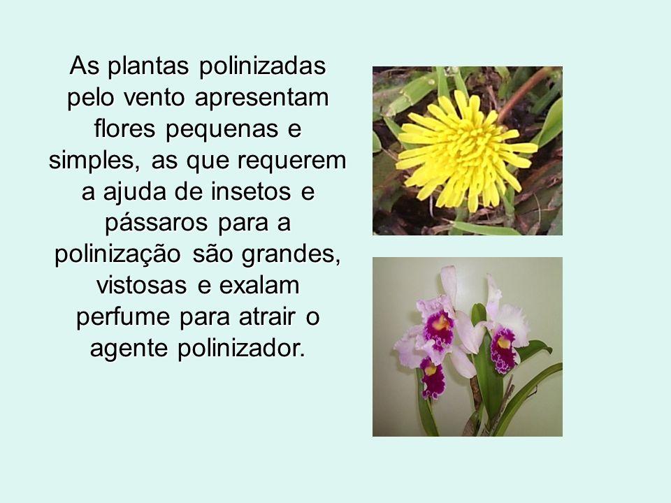 As plantas polinizadas pelo vento apresentam flores pequenas e simples, as que requerem a ajuda de insetos e pássaros para a polinização são grandes, vistosas e exalam perfume para atrair o agente polinizador.