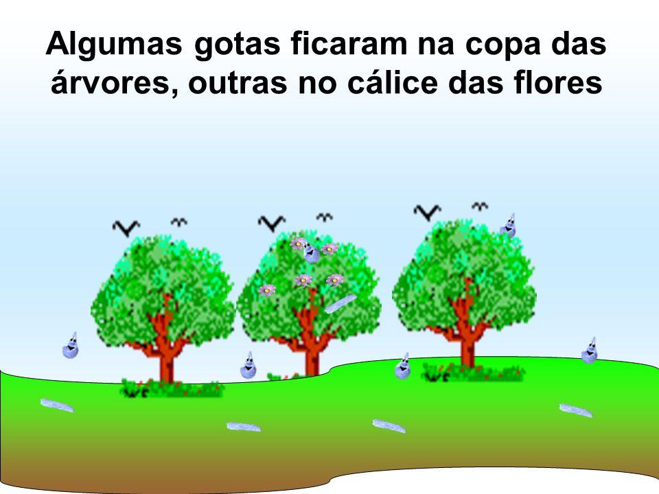 Algumas gotas ficaram na copa das árvores, outras no cálice das flores