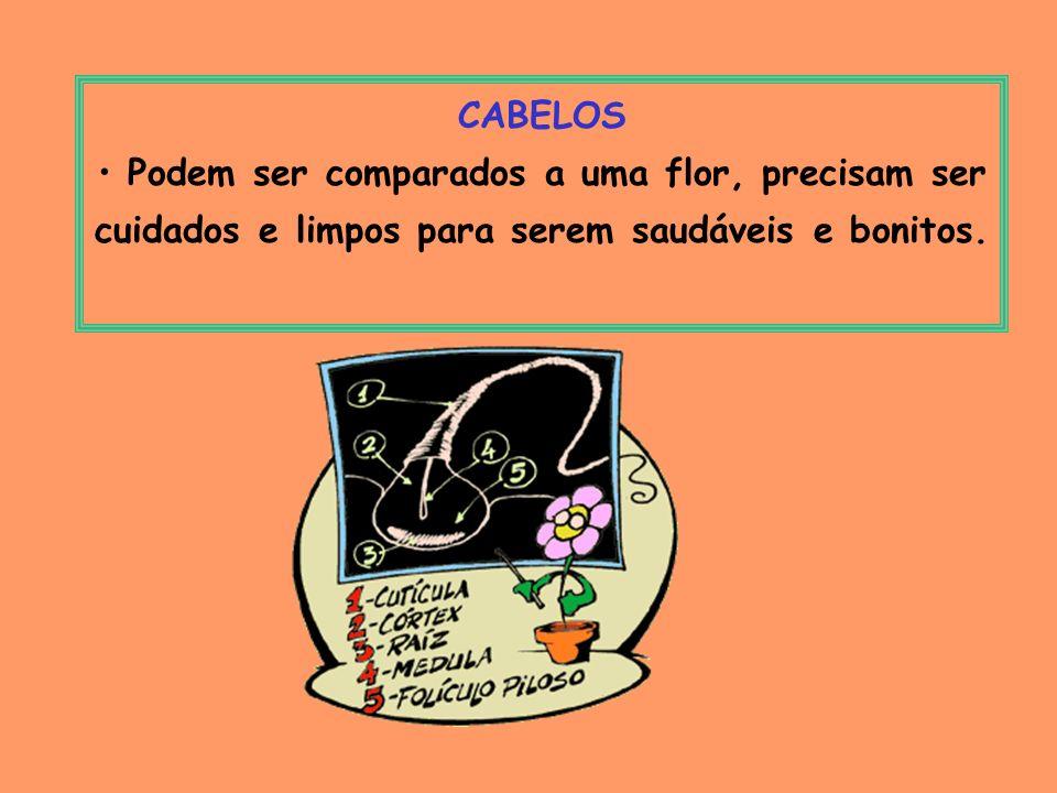 CABELOSPodem ser comparados a uma flor, precisam ser cuidados e limpos para serem saudáveis e bonitos.