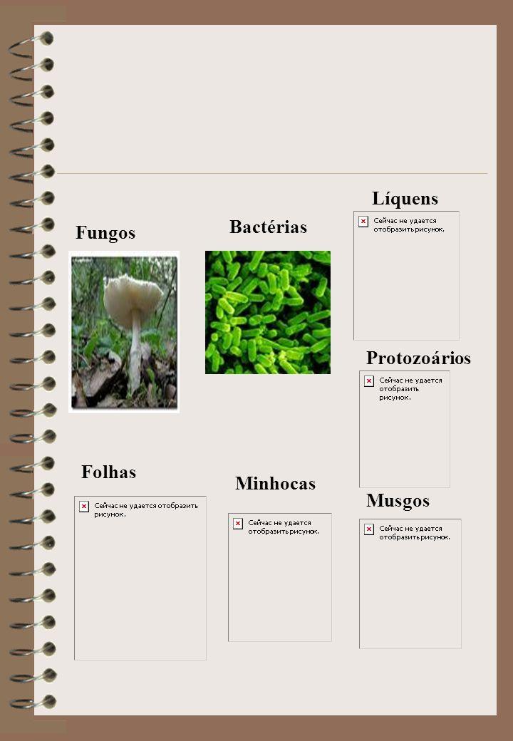 Líquens Bactérias Fungos Protozoários Folhas Minhocas Musgos