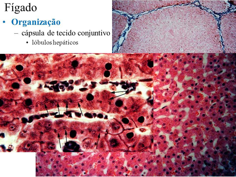 Fígado Organização cápsula de tecido conjuntivo lóbulos hepáticos