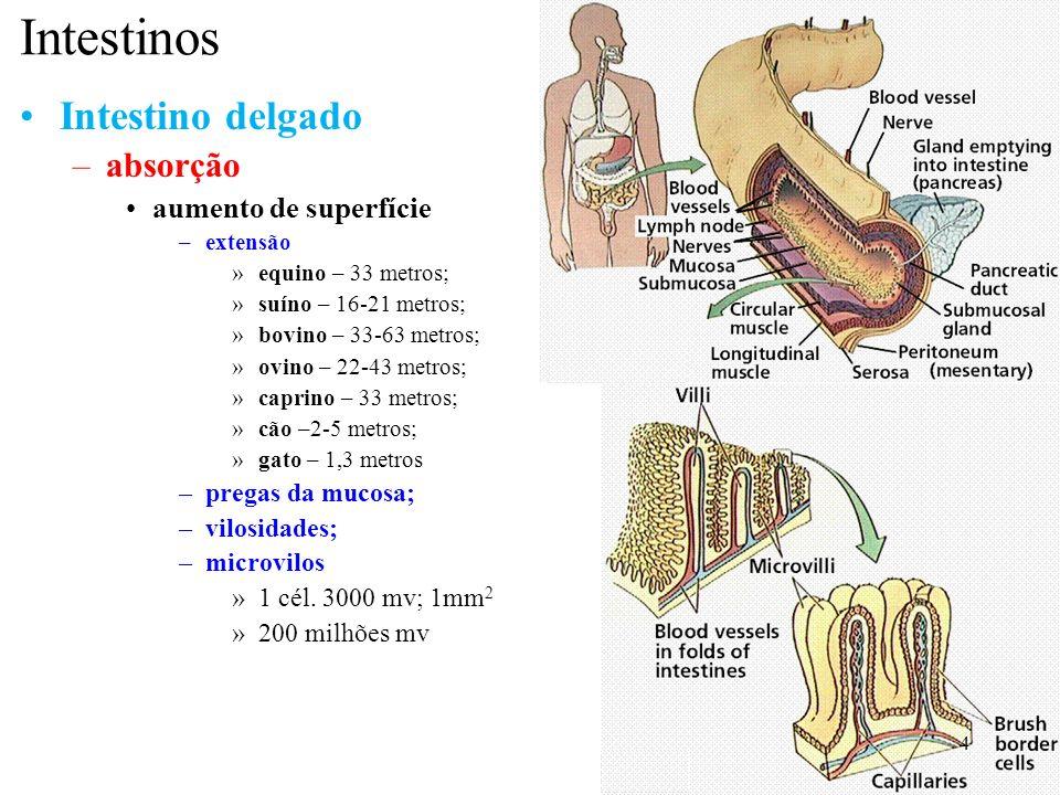 Intestinos Intestino delgado absorção aumento de superfície