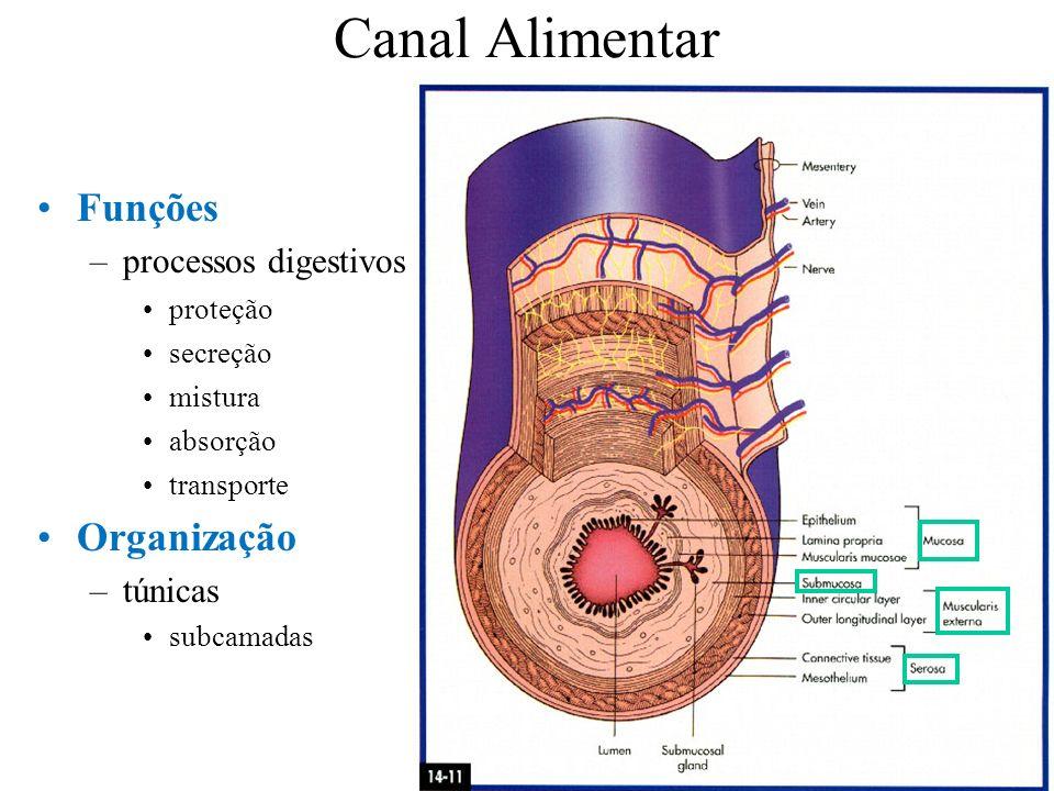 Canal Alimentar Funções Organização processos digestivos túnicas