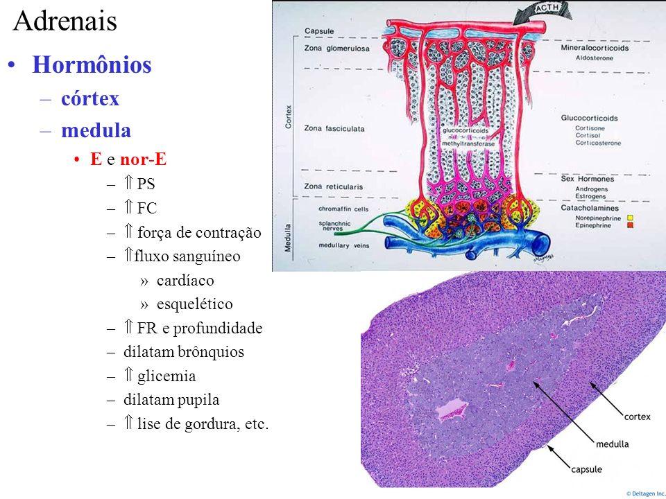 Adrenais Hormônios córtex medula E e nor-E  PS  FC