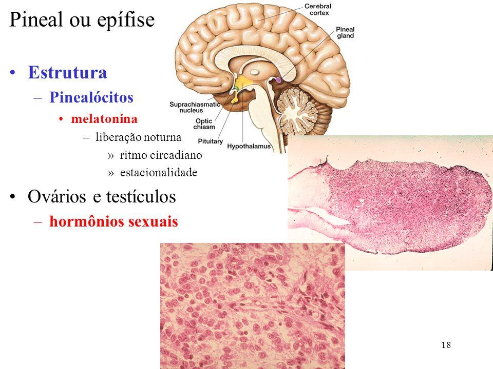 Pineal ou epífise Estrutura Ovários e testículos Pinealócitos