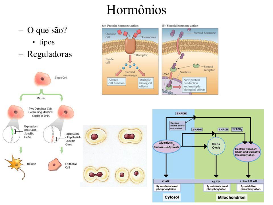 Hormônios O que são tipos Reguladoras