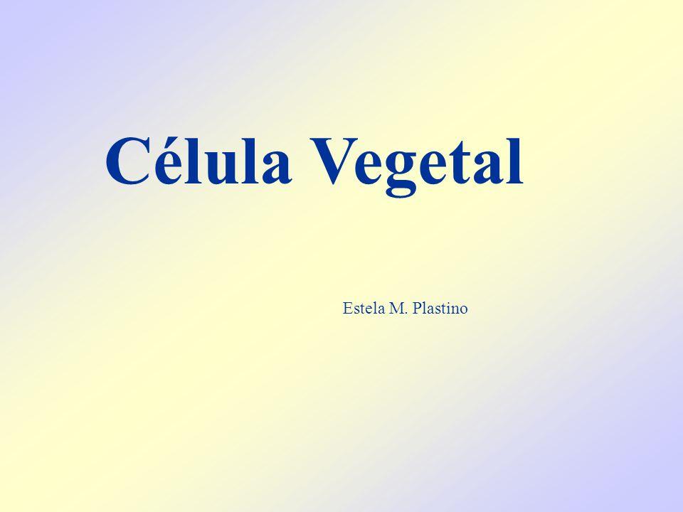 Célula Vegetal Estela M. Plastino