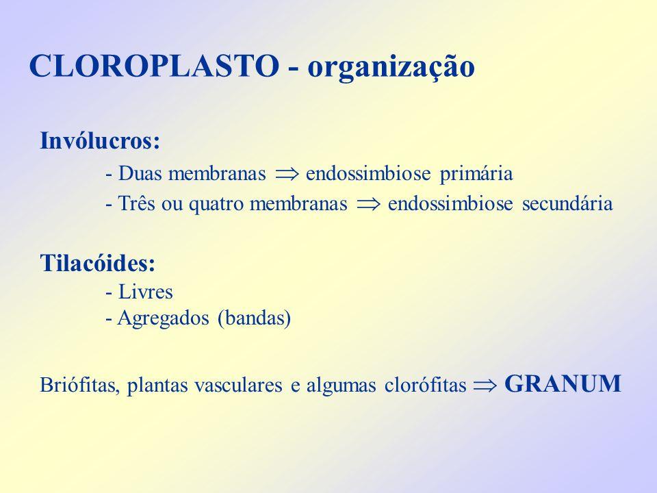 CLOROPLASTO - organização