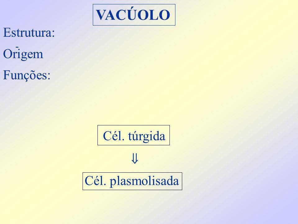 VACÚOLO Estrutura: - Origem Funções: Cél. plasmolisada Cél. túrgida 