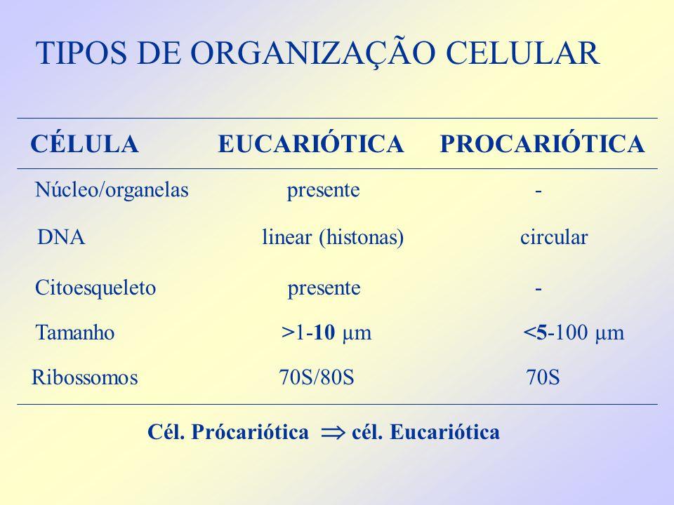 TIPOS DE ORGANIZAÇÃO CELULAR