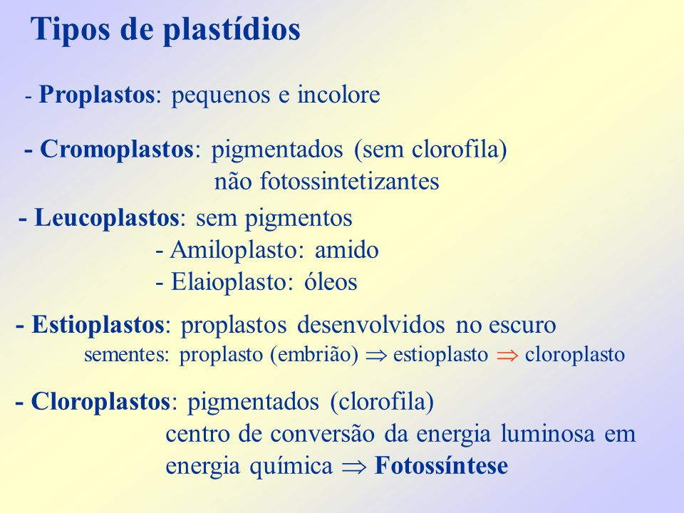 Tipos de plastídios - Cromoplastos: pigmentados (sem clorofila)