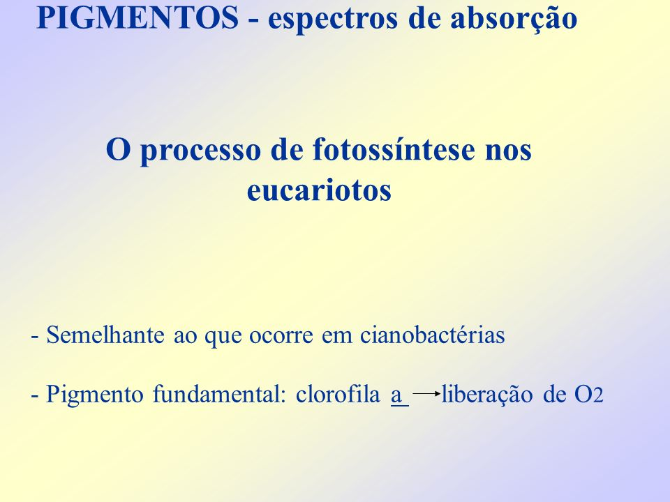 O processo de fotossíntese nos eucariotos