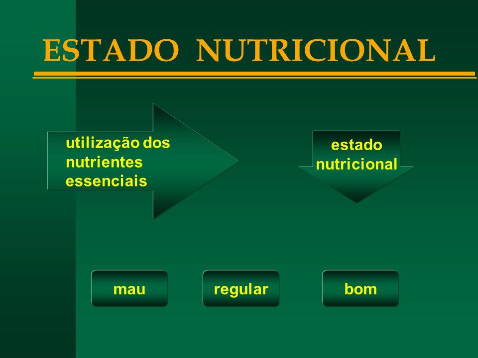 ESTADO NUTRICIONAL utilização dos nutrientes essenciais estado