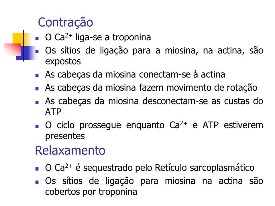 Contração Relaxamento O Ca2+ liga-se a troponina