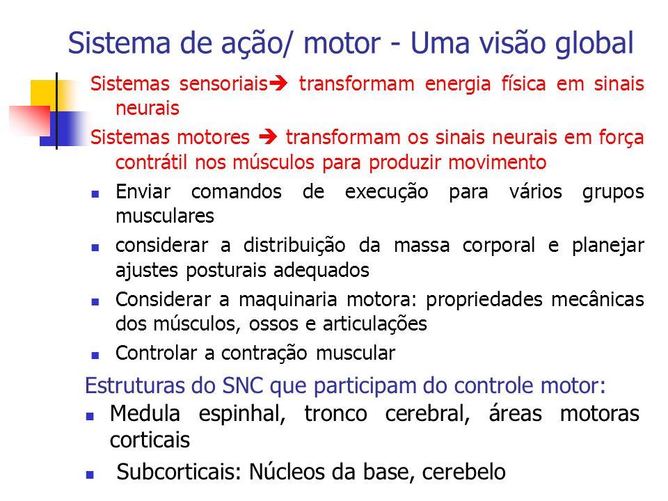 Sistema de ação/ motor - Uma visão global