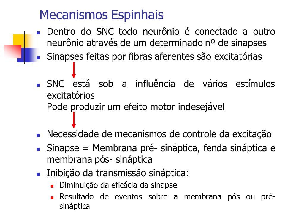 Mecanismos Espinhais Dentro do SNC todo neurônio é conectado a outro neurônio através de um determinado nº de sinapses.