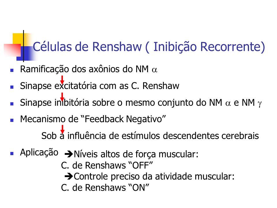 Células de Renshaw ( Inibição Recorrente)