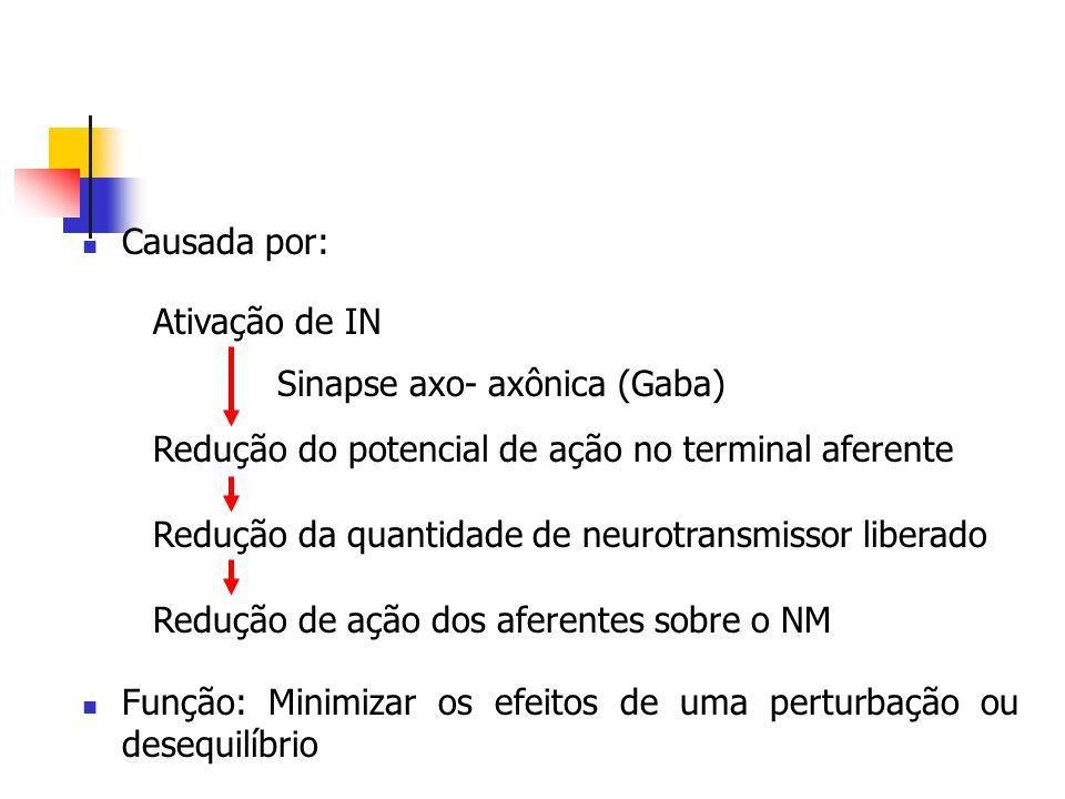 Causada por: Função: Minimizar os efeitos de uma perturbação ou desequilíbrio. Ativação de IN. Redução do potencial de ação no terminal aferente.