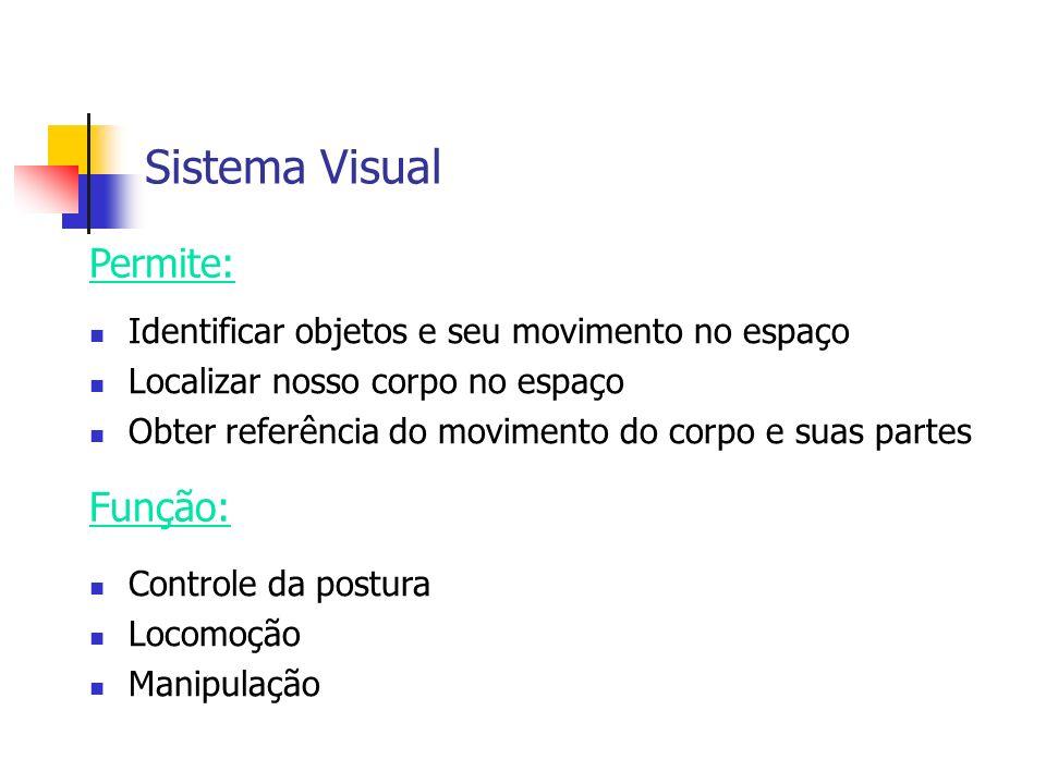 Sistema Visual Permite: Função: